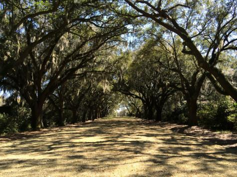 hall of oaks