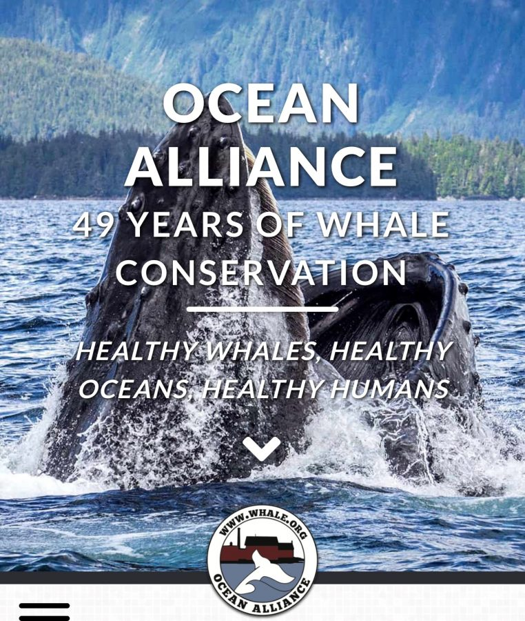 Celebrating the Whale and Ocean Conservation!